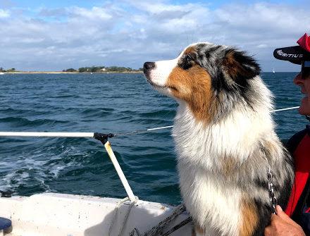 Sortie en mer avec la chienne Rina